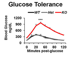 PLOS graph of glucose levels after protein deletion