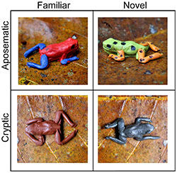 Clay frog models
