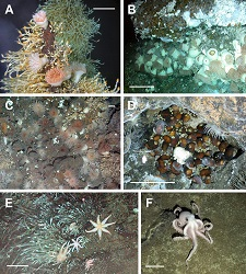 marine organisms at vent