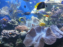 fish swim through an aquarium. A large clam sits in the bottom right of the image, surrounded by coral and rocks. Above the aquarium floor brightly colored fish swim about the tank.