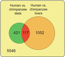 Image from Article showing human vs chimpanzee diets and livers