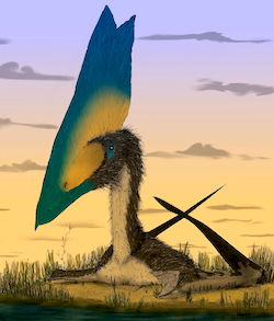 Pterosaur illustration