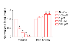 Food intake graph mice vs tree shrews