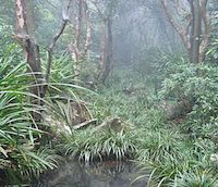 this image depicts a tropical landscape. The bottom of the image shows a small body of water. Surrounding the water are small green plants with numerous large long, thin leaves coming from the center stalk. Behind the water are a few tall skinny brown trees.
