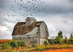 barn and birds