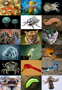 Different animal phenotypes