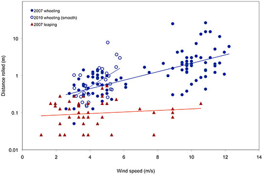 Wind speed vs. distance traveled by wheeling beetles