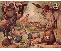 Illustration of African animals