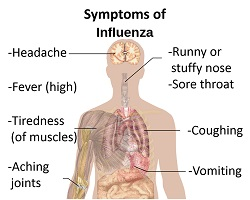 Flu symptoms anatomy chart