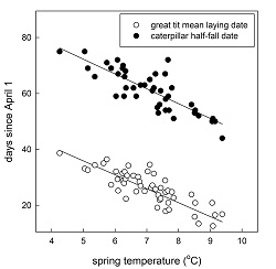Data shows two lines. One shows that as the temperature increases, the catepillars emerge earlier. The other line shows that as the temperature increases (same axis), the birds lay their eggs earlier. These lines show a decrease from left to right across the x-axis.