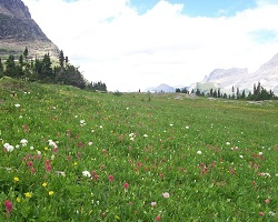 The foreground shows a green field filled with tall grass and wild yellow, white, and pink flowers. The background shows huge gray mountains that are snow-covered. The sky behind the mountains is blue with a single cloud floating overhead.