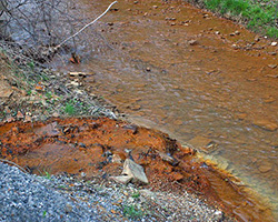 Contaminated stream
