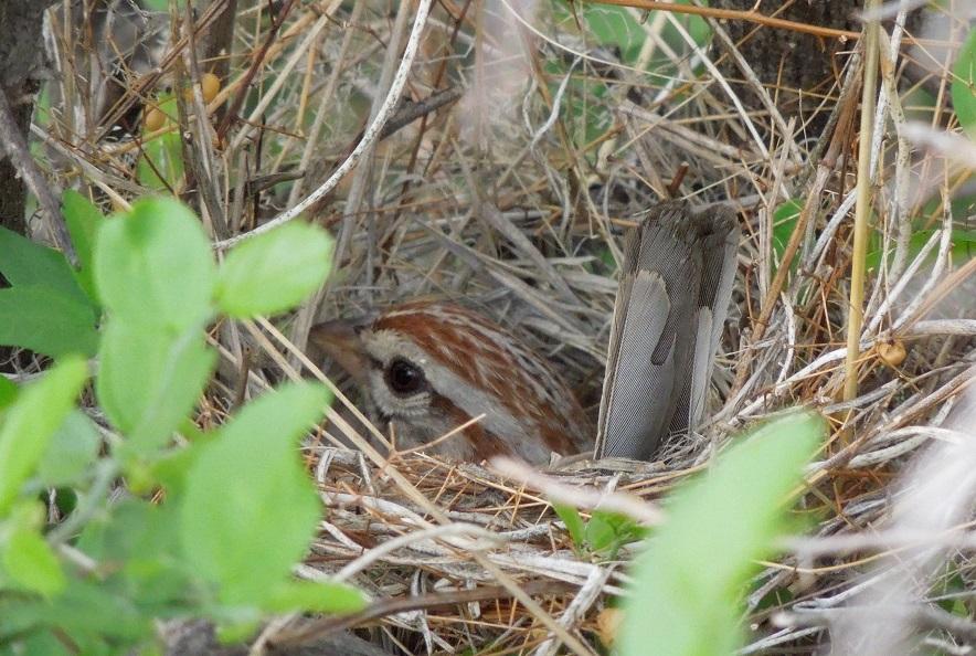 Desert Ornithologist Ask A Biologist