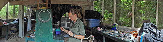 Kate Ihle in field lab