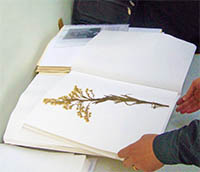 Complteted dried and pressed herbarium specimen.