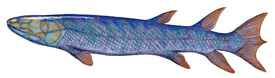 Eusthenopteron foordi, a lobe-finned fish from the Late Devonian of Canada, pencil drawing