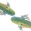 salamander thumb