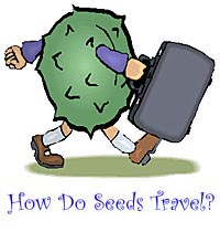 how do seeds travel?