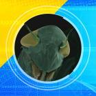 2012 Ugly Bug Contest image