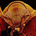 Ugly Bug image