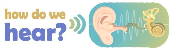 How do we hear illustration