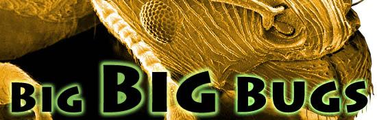 Big Big Bugs