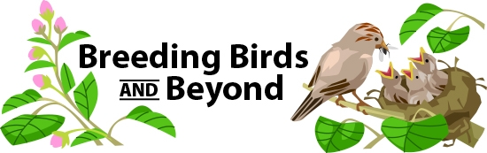 Breeding Birds