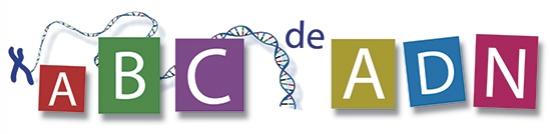 Fundamentos ADN