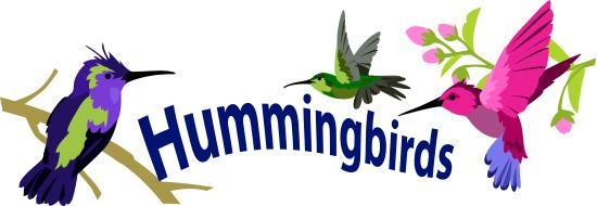 Hummingbirds Story