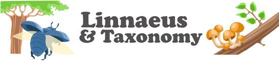 Linnaeus and the world of taxonomy