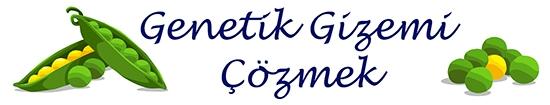 Mendel-Turkish