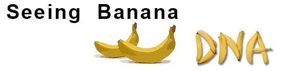 Extracting Banana DNA