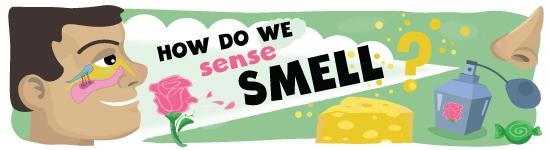 Sense of Smell