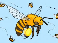 Honey bee life
