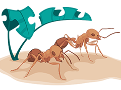 Ants Illustration