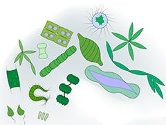 Arctic microorganisms