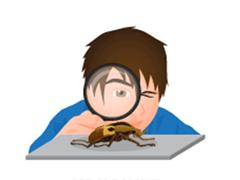 Beetle Dissection