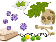 Biology beginnings illustration