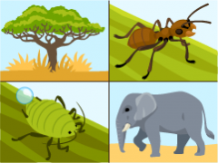 Mutualisms in the African savanna