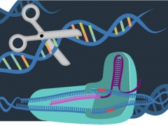 CRISPR Cas9 gene editing tool illustration