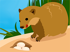 Mongoose and eggs