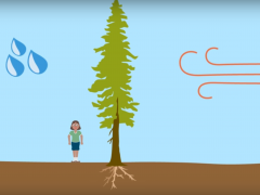 Where does a plants mass come from? Soil, water, or air?