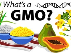 GMOs illustration