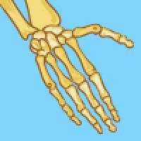 Learn about bones