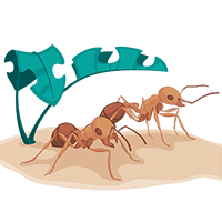 Large Ants