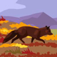Fox in tundra