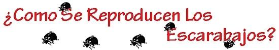 Escarabajos reproducen