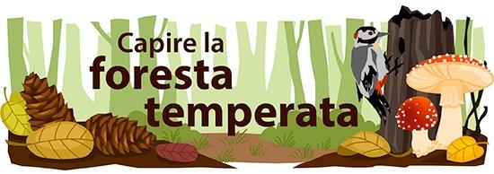 Bioma forestale temperato