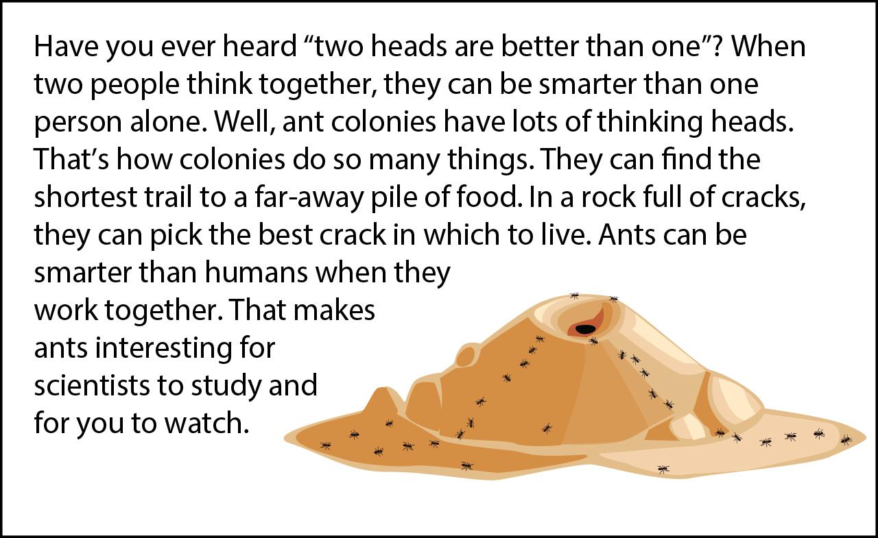 Biology Reading Flashcards - Ants | Ask A Biologist