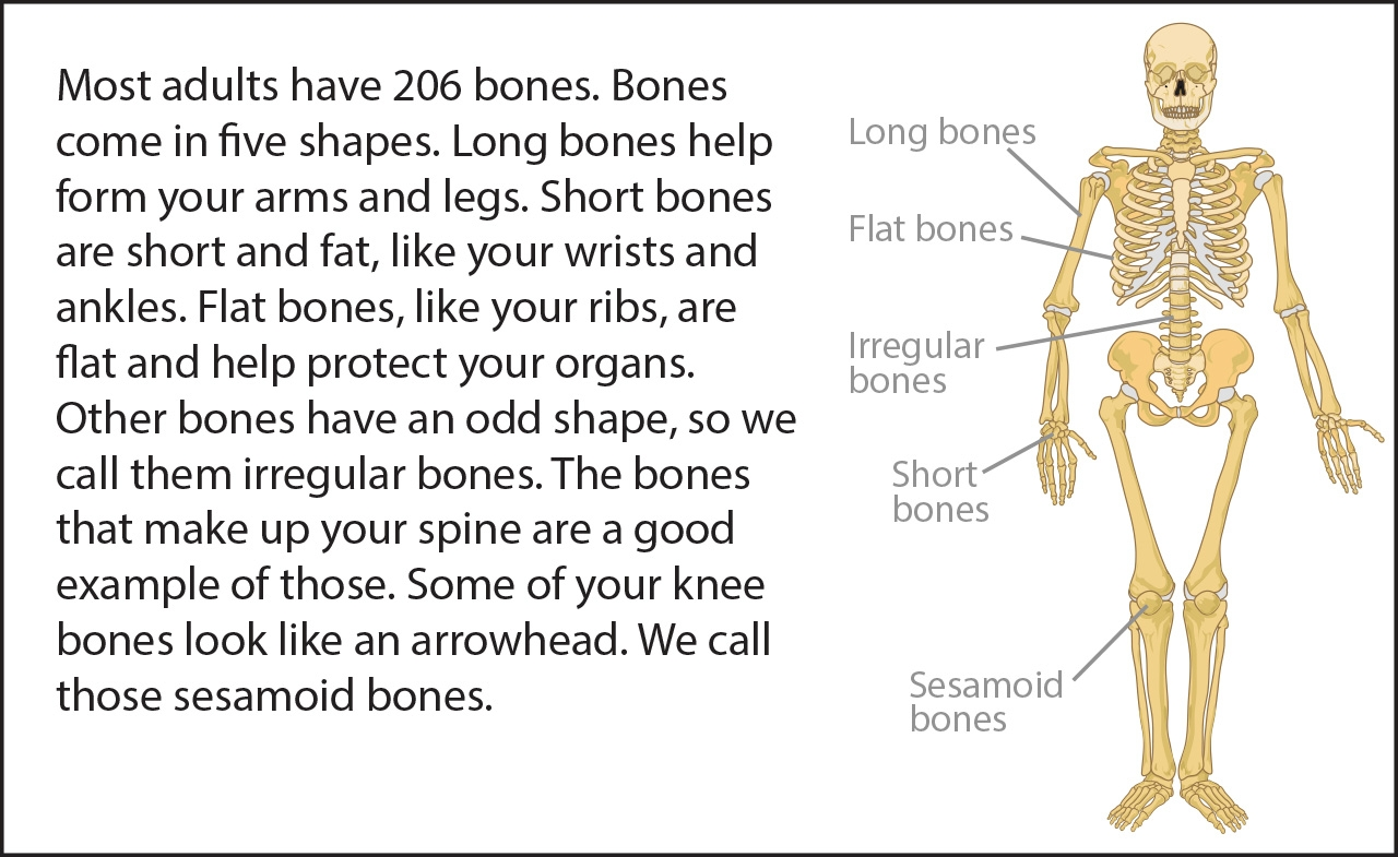 Bone Bits   Ask A Biologist